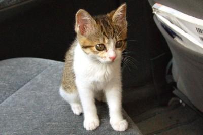 060527-cat1