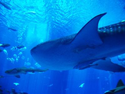 2005年の美ら海水族館